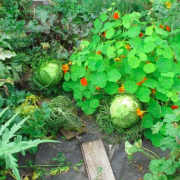 Garten Leh 03
