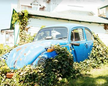 unsplash Auto im Garten